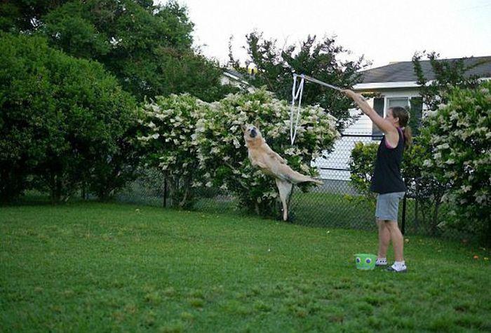 Собака-гимнаст.