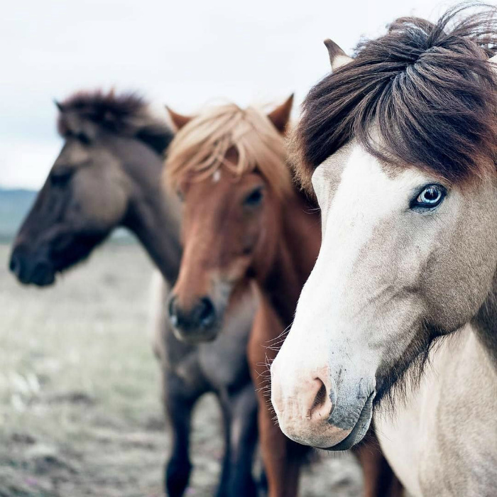 Тут даже лошади красивые. | Фото: www.laguiadelvaron.com.