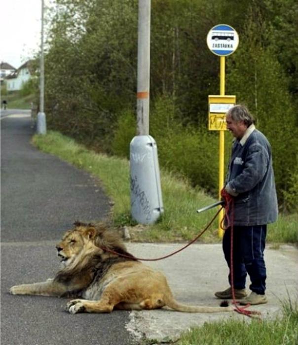 Человек с кошечкой.