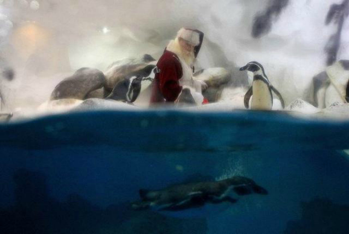 Дед Мороз приходит даже к пингвинам.