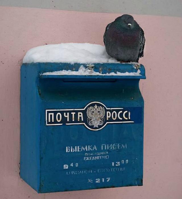 На почте России работают голуби?