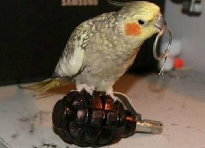 Птичка, которая играет с огнем.