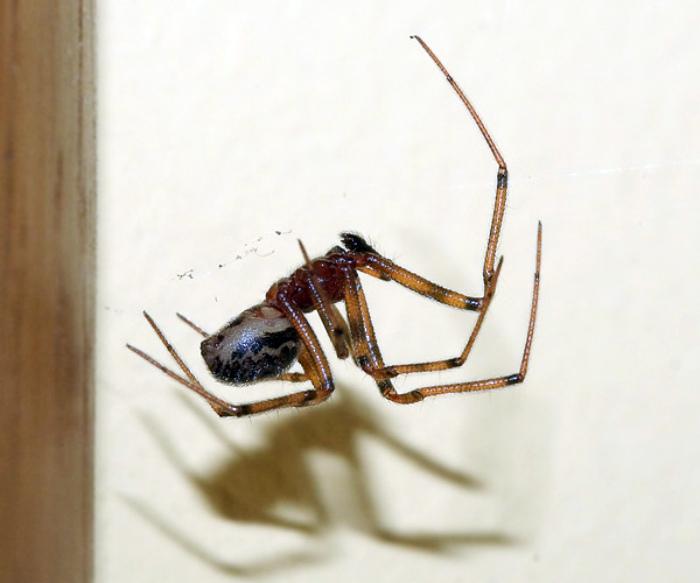 Средство от пауков.