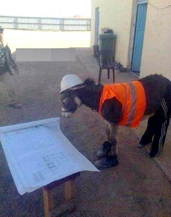 Ответственный строитель. | Фото: Барсучья нора.