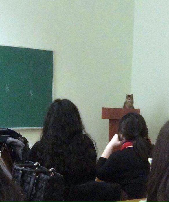 Преподаватель.