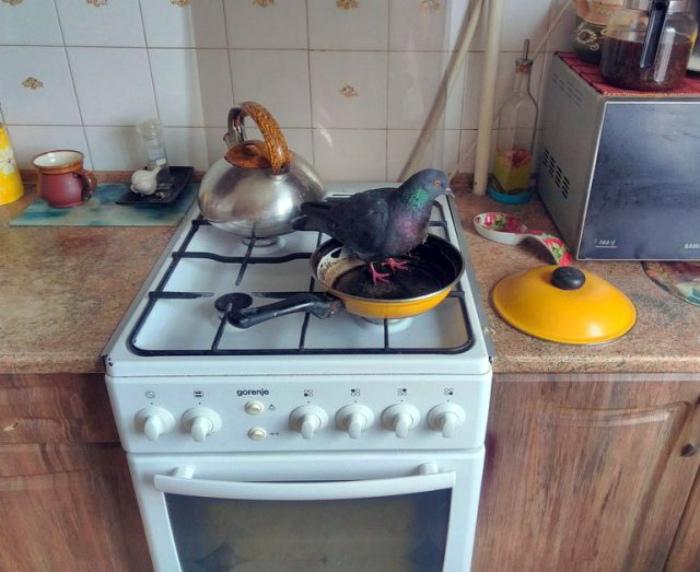 Птичка на сковородке.