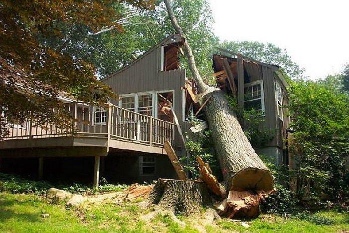 «Да, оказывается, не так уж и мешало нам это дерево!»