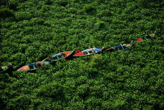 Люди на лодках пробираются сквозь густые заросли гиацинтов на Ниле.