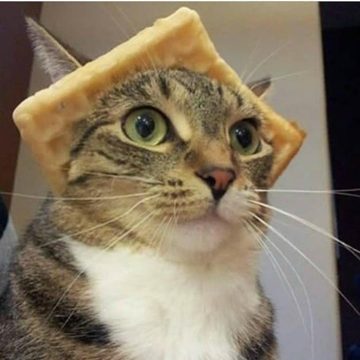 Шляпа из хлебушка. | Фото: Reddit.