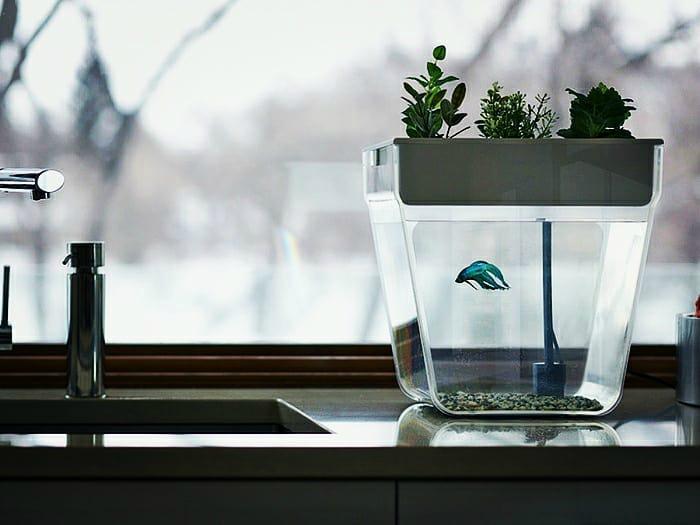 Замкнутая экосистема в виде аквариума.
