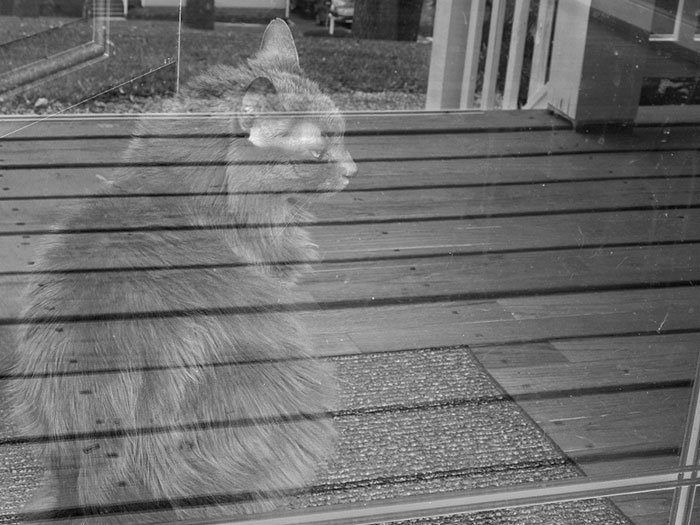 Призрачное отражение кота.