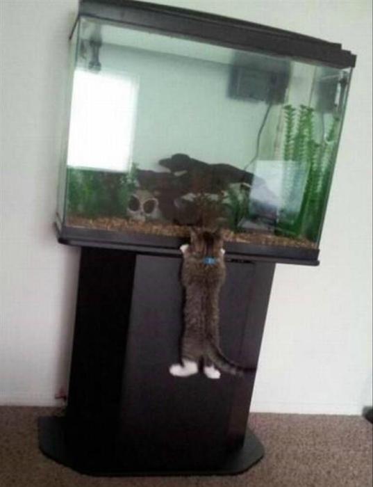 Маленький рыбак.