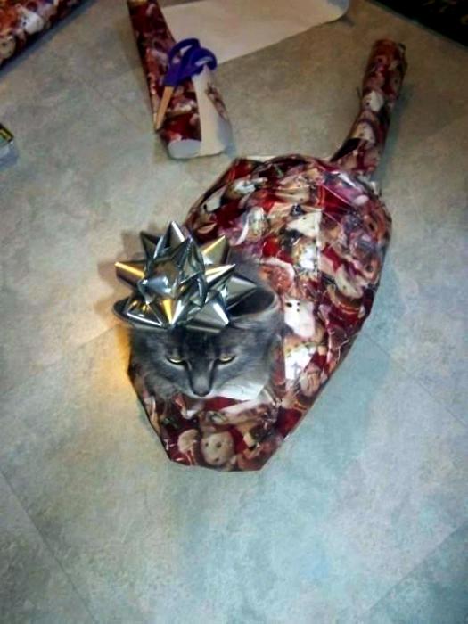 Новогодняя упаковка кота.