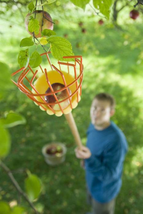 Приспособление для снятия плодов. | Фото: Home Sweet Home.