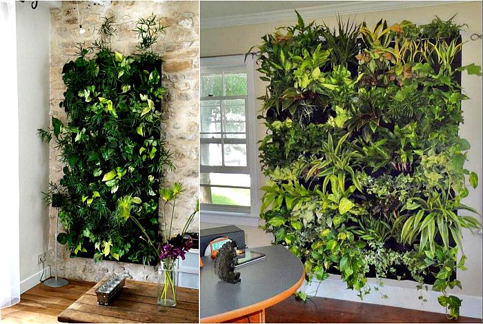 Живые растения на стенах.