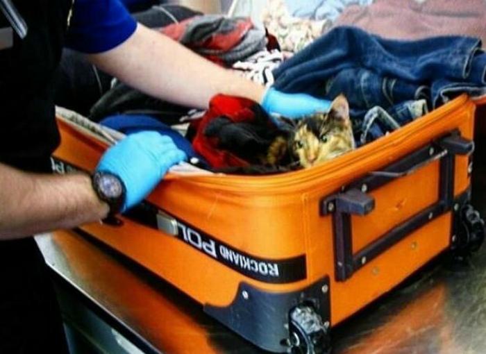 Кот в чемоданчике. | Фото: homad.ru.