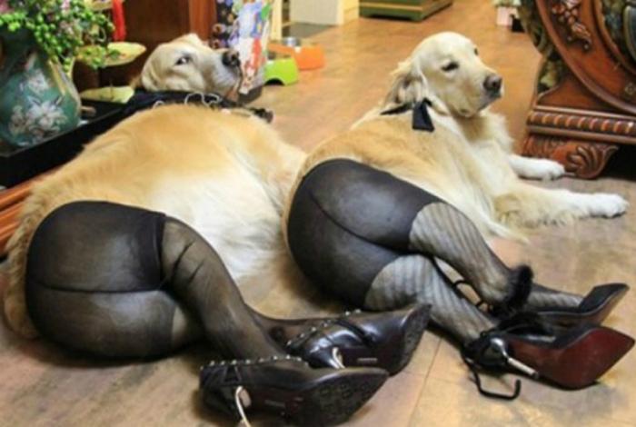 Если скучно, их можно нарядить в смешные костюмы.
