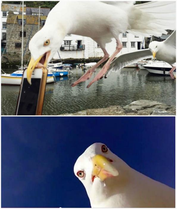 Везучая чайка.