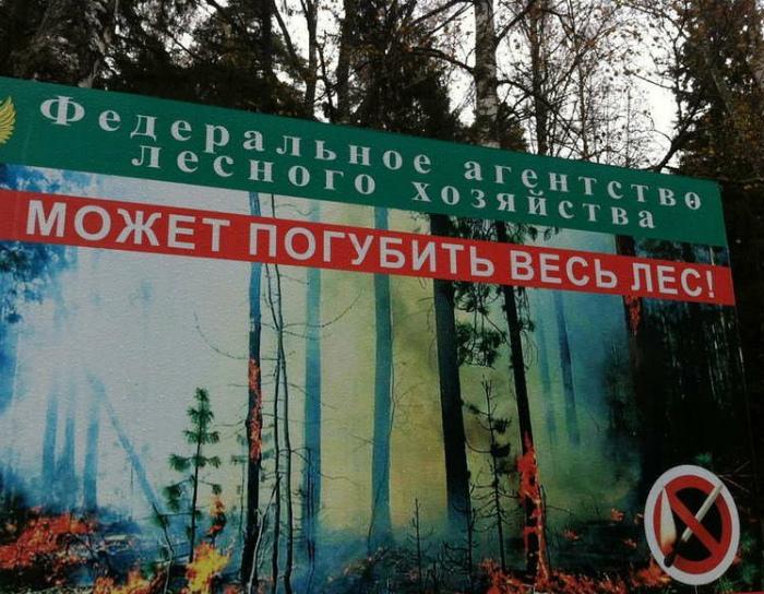 Федерация лесного хозяйства - страшная организация! | Фото: wbsh.spb.ru.