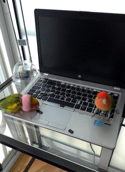 Попугайчики, которые заскучали. | Фото: Zefirka.