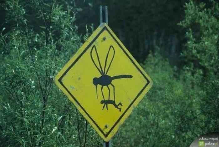 Остерегайтесь гигантских комаров, они уносят людей.