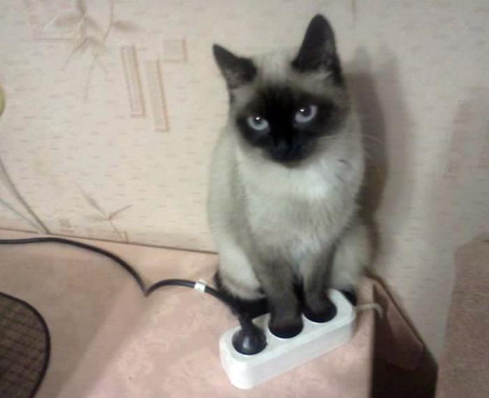 Кошка перфекционист.