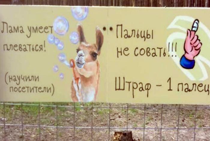 Проделки веселой ламы.