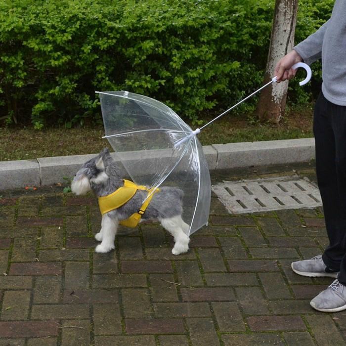 Поводок с зонтиком. | Фото: MercadoLibre.