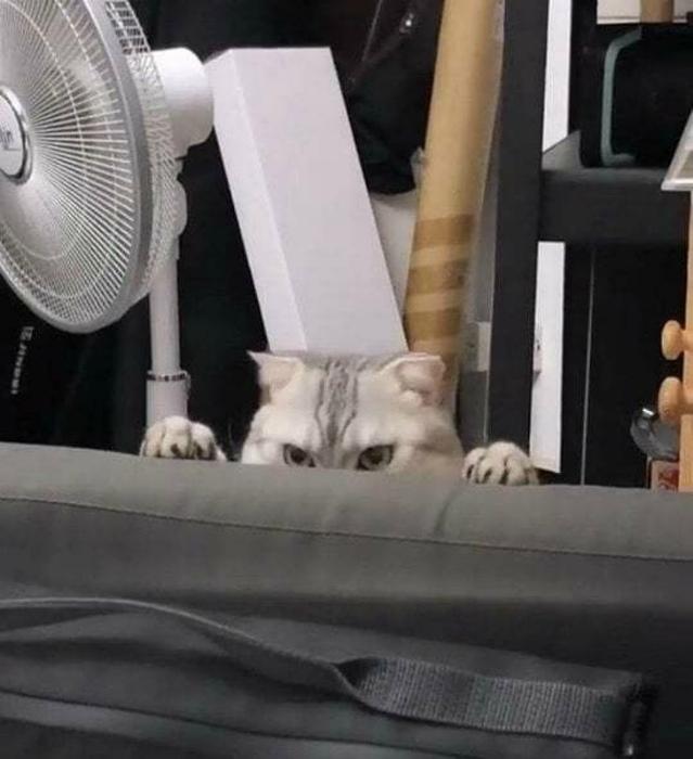 Злой кот в засаде. | Фото: trollno.com.