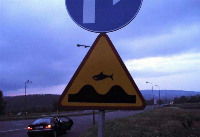 Летающие акулы.