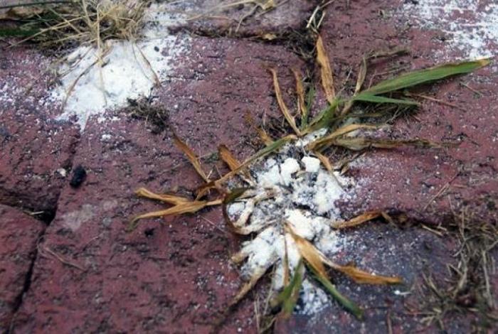 Уничтожить сорняки на грядках. | Фото: fiest.ru.