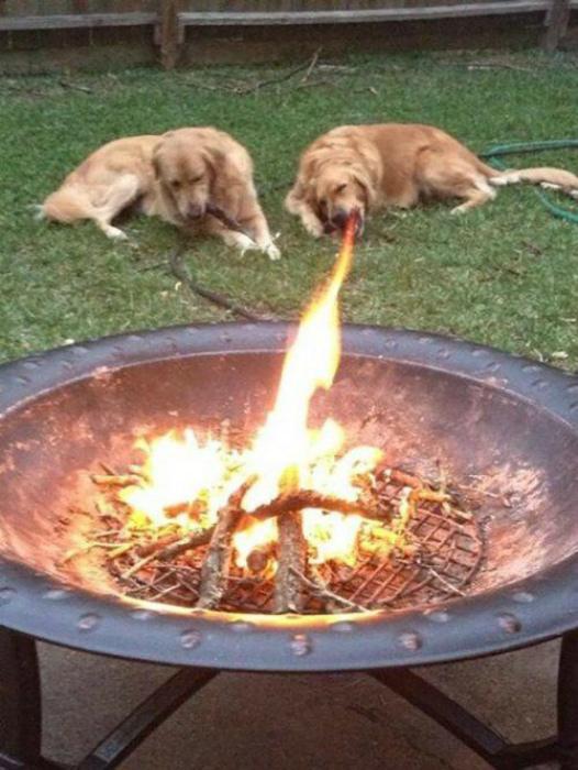 Огнедышащая собака. | Фото: Fishki.