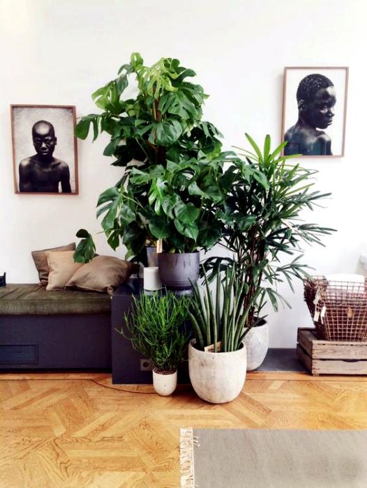 Комнатные растения в интерьере.