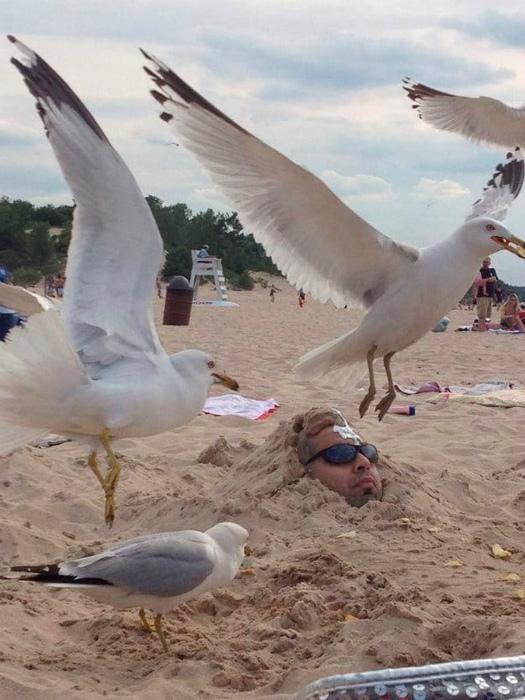 Картина маслом: «Чайки над головой».