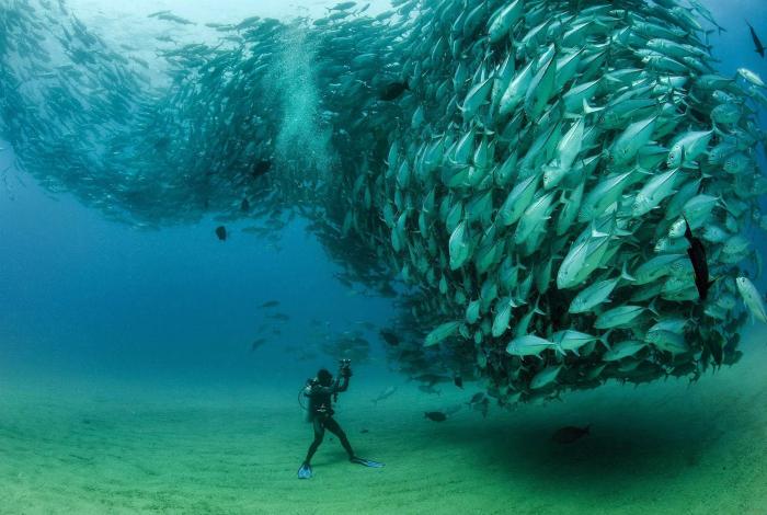 Человек и стая рыб.