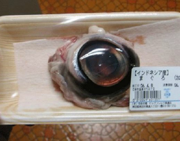 Отварные глаза тунца.