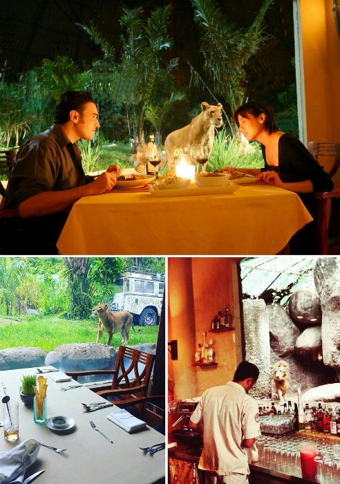 Ресторан со львами.