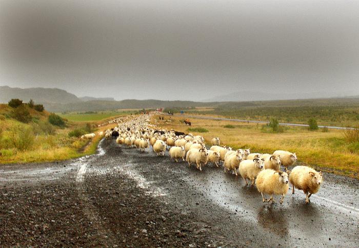 Небольшая пробка на дороге. | Фото:  Flickr.