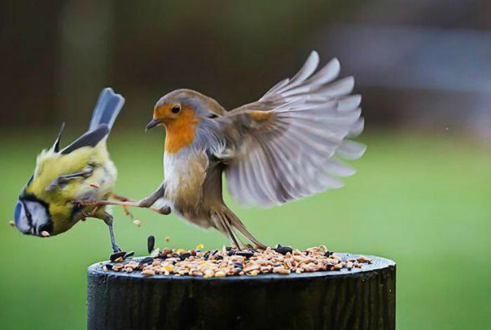 Жадная птица.