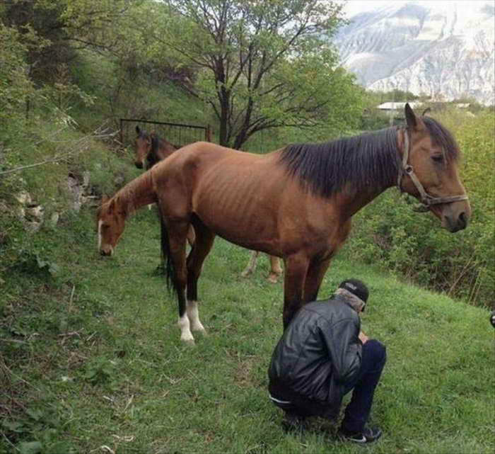 Двухсторонняя лошадь.   Фото: Ribalych.ru.