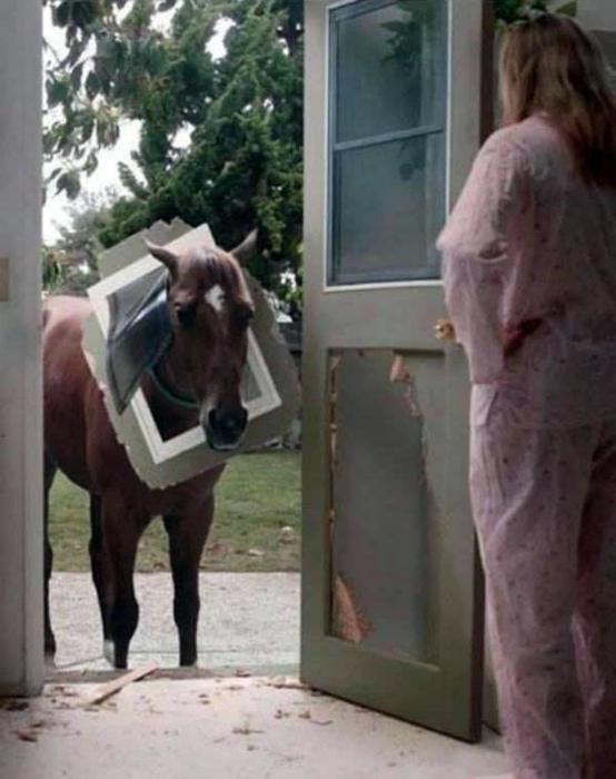 Сцена: Возвращение блудного коня. | Фото: LoLs.ru.
