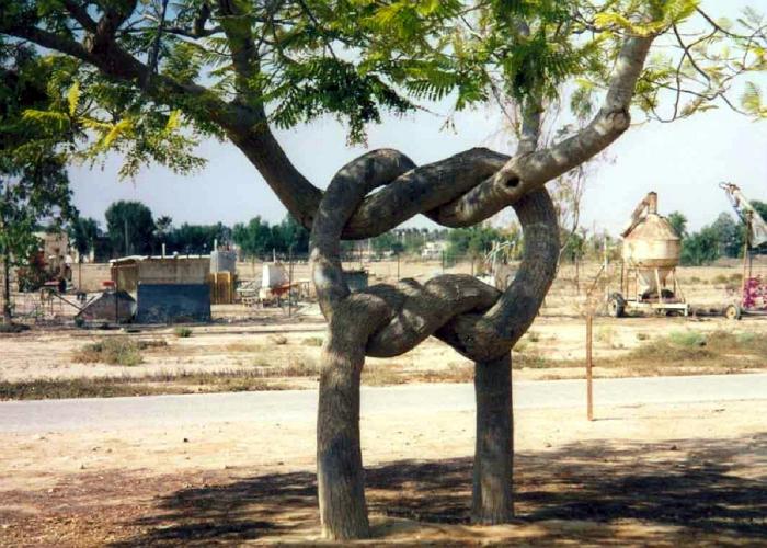 Необычные деревья.