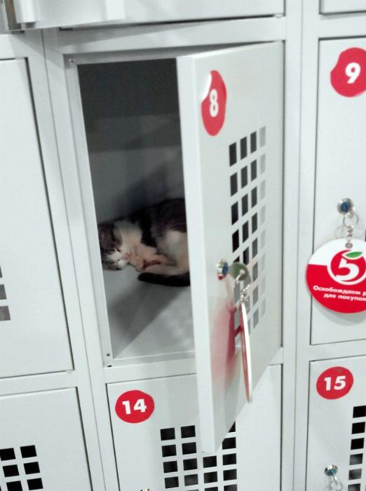 Котенок в камере.