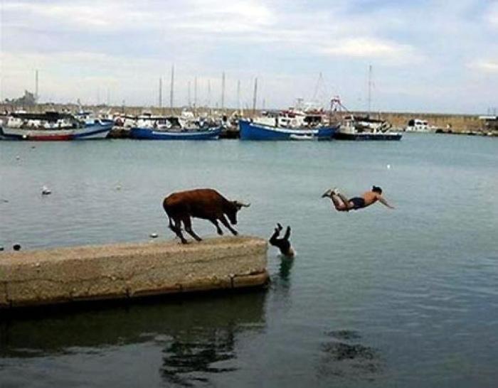 Неприятность с быком.