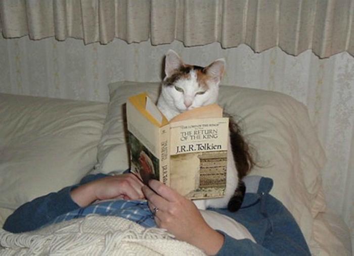 Кот ученый читает.