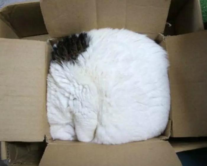 Упаковал себя в коробку!