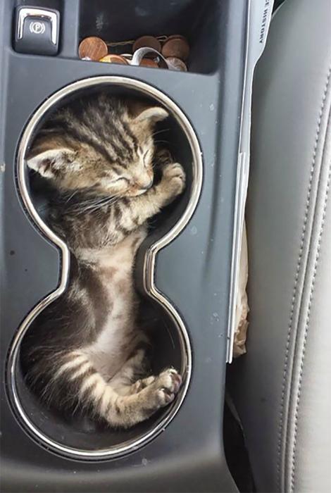 Место для кота в машине.