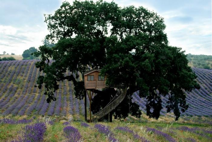 Уютный отель на дереве.