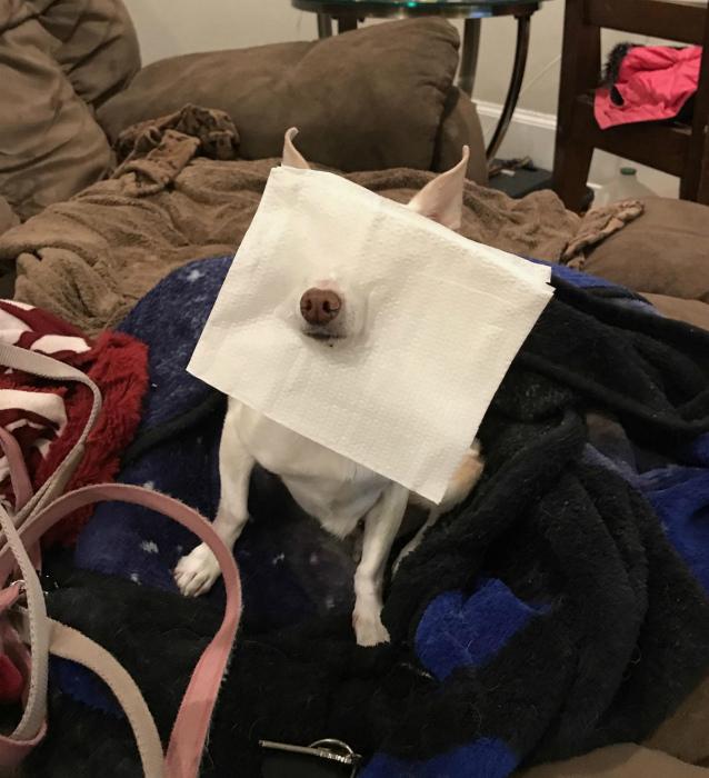 Все хотят тканевые маски. | Фото: Reddit.