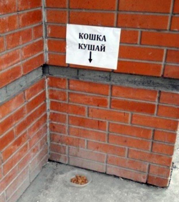 Кошки не умеют читать. | Фото: Chert-poberi.ru.